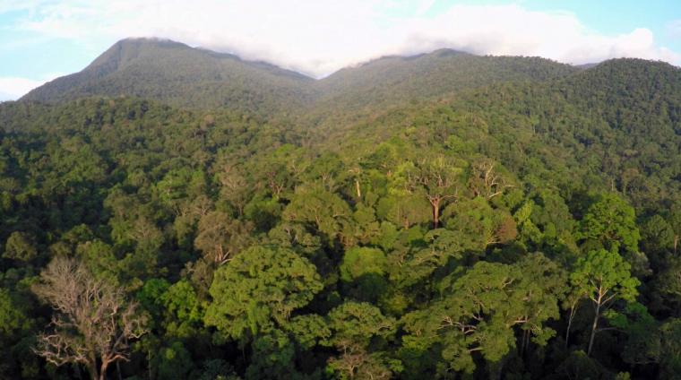 Letak & luas kawasan TN Gunung Palung, Canopy Pohon di Cabang Panti