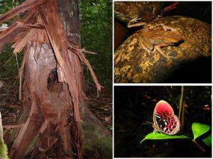 Fauna di Riam Berasap Ketapang, Kalbar