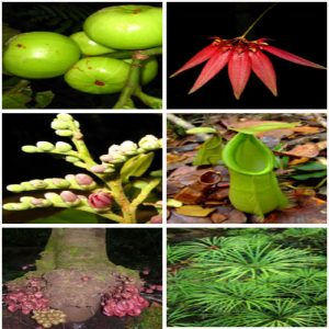 Flora di Riam Berasap Ketapang, Kalbar