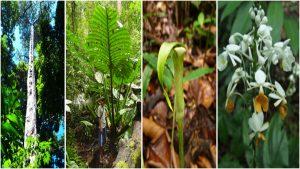 Flora di Lubuk Baji