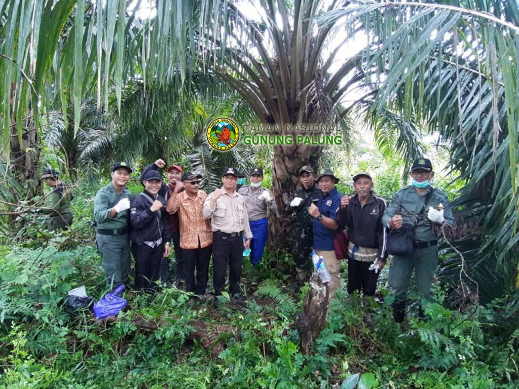 Pemusnahan Tanaman Sawit Dalam Kawasan TN Gunung Palung