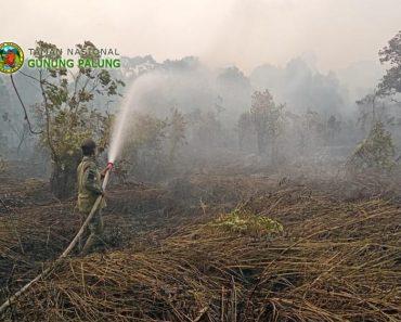 Kebakaran Hutan dan Lahan di Kayong Utara