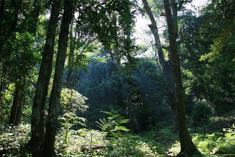 Sejarah Taman Nasional Gunung Palung